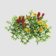 Небольшие растения - Шанхуа 41 3d model
