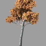 Pflanzen - Laube 36 3d model