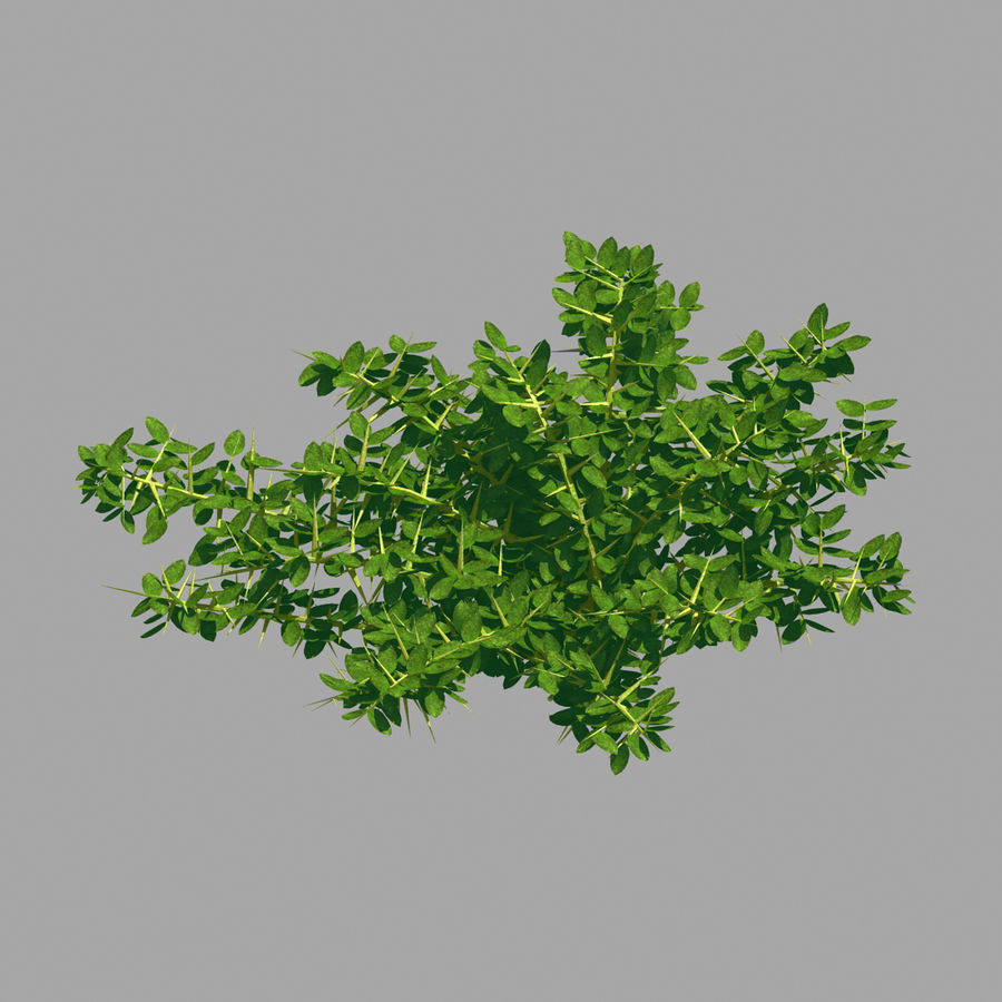 Plante - Mauvaise herbe 036 royalty-free 3d model - Preview no. 4