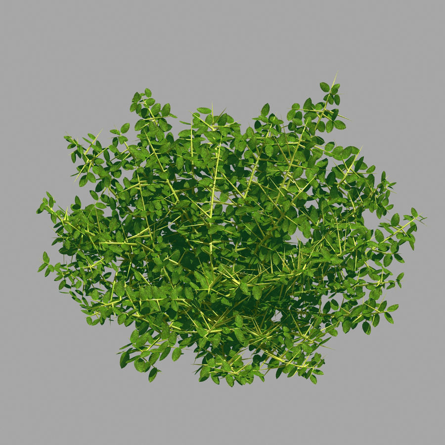 Plante - Mauvaise herbe 036 royalty-free 3d model - Preview no. 5