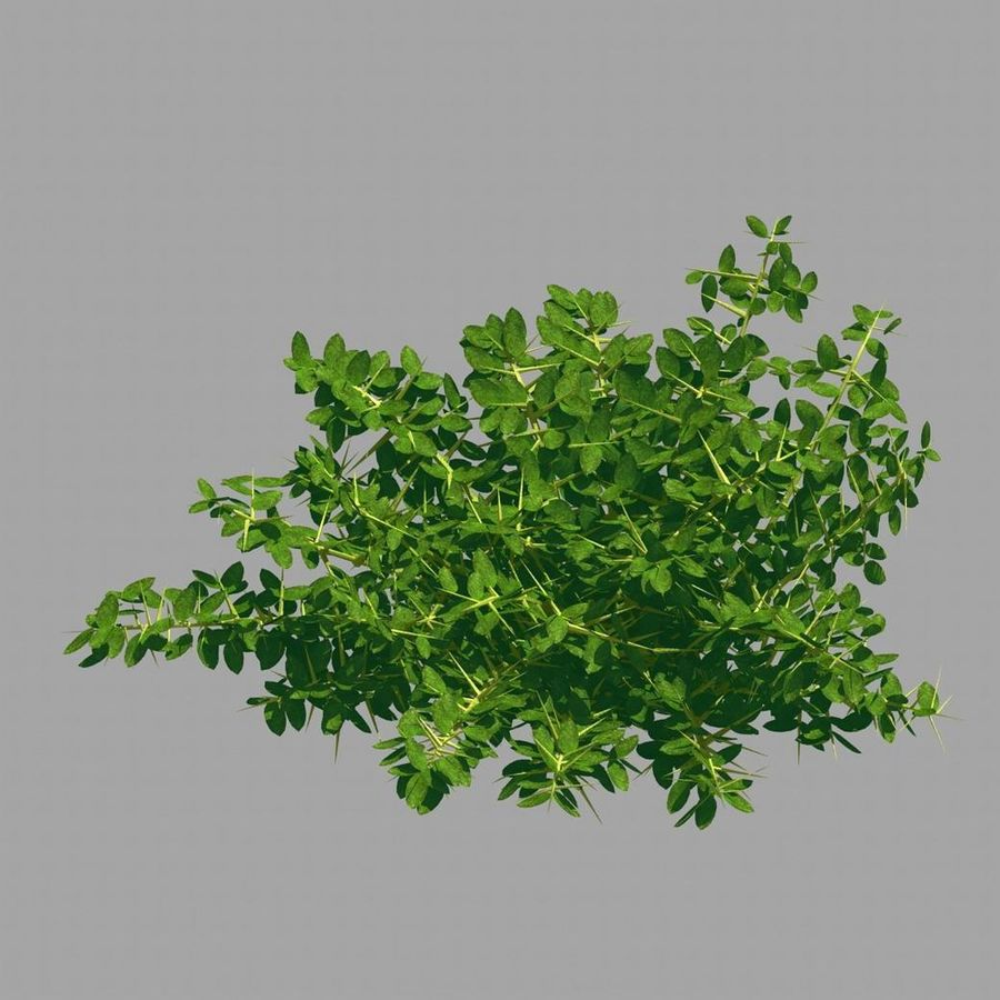 Plante - Mauvaise herbe 036 royalty-free 3d model - Preview no. 6