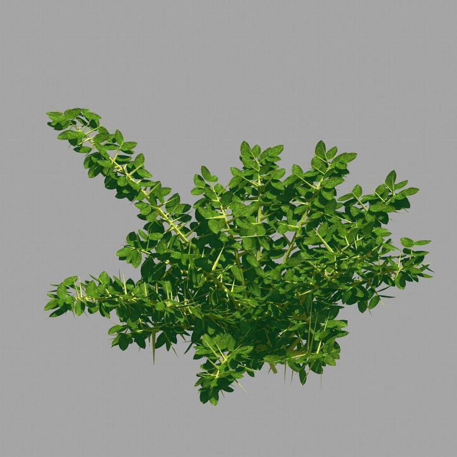 Plante - Mauvaise herbe 036 royalty-free 3d model - Preview no. 2