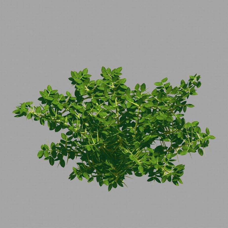 Plante - Mauvaise herbe 036 royalty-free 3d model - Preview no. 8