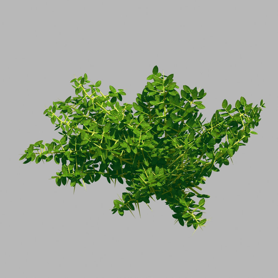 Plante - Mauvaise herbe 036 royalty-free 3d model - Preview no. 1