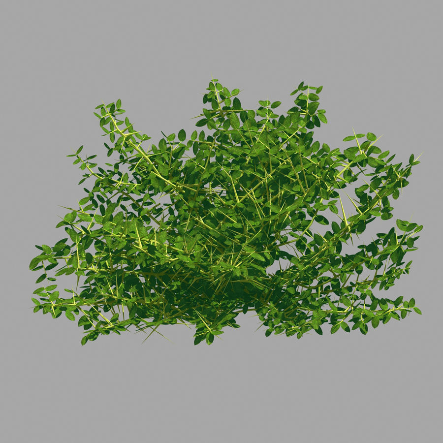 Plante - Mauvaise herbe 036 royalty-free 3d model - Preview no. 3
