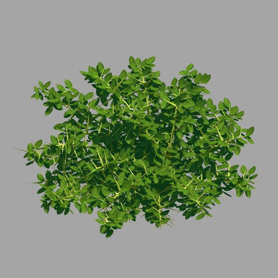 Plante - Mauvaise herbe 036 royalty-free 3d model - Preview no. 7