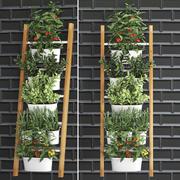 Rośliny ozdobne do kuchni na poręczy 35 3d model