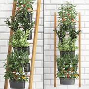Rośliny ozdobne do kuchni na poręczy 36 3d model