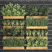 Dekorative Pflanzen für die Küche auf Holzkiste 37 3d model