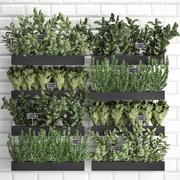 Dekorative Pflanzen für die Küche auf Holzkiste 38 3d model