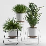 rośliny 240 3d model