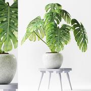 rośliny 190 3d model