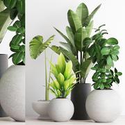 plants 192 3d model