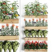 Dekorative Pflanzen für die Küche auf Holzkiste 45 3d model