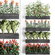 Dekorative Pflanzen für die Küche auf Holzkiste 47 3d model