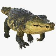 Geanimeerde krokodil zwemmen opgetuigd 3d model