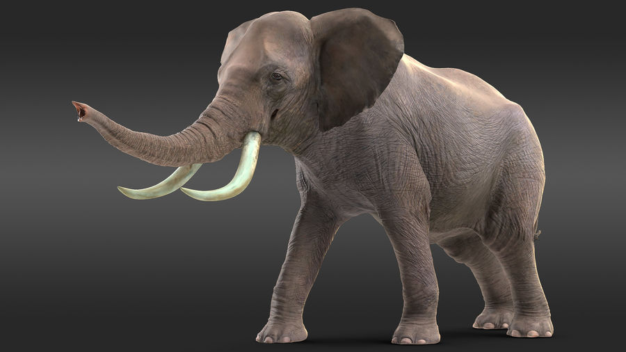 Animerad Elephant Agressive Move Fur Rigged royalty-free 3d model - Preview no. 2