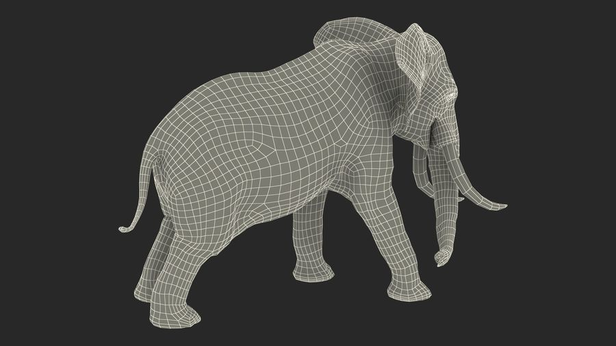 Animerad Elephant Agressive Move Fur Rigged royalty-free 3d model - Preview no. 18