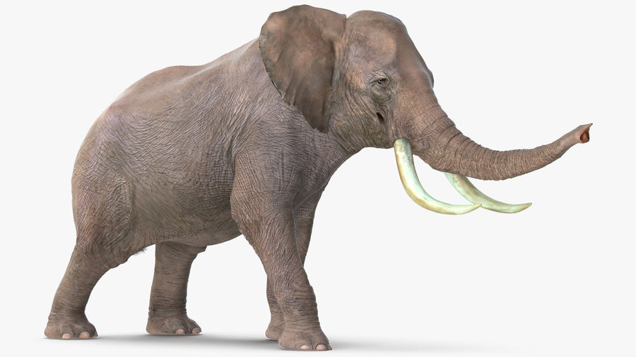 Animerad Elephant Agressive Move Fur Rigged royalty-free 3d model - Preview no. 6