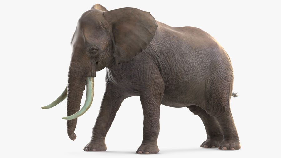Animerad Elephant Agressive Move Fur Rigged royalty-free 3d model - Preview no. 4