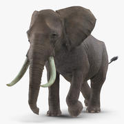 Animerad Elephant Running Fur Rigged 3d model