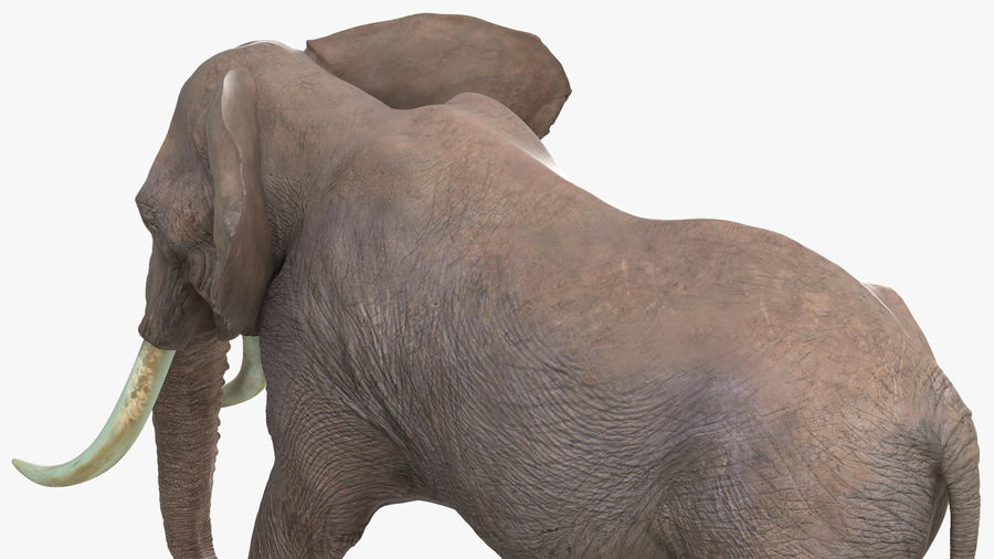 Animated Elephant Walking Fur Rigged royalty-free 3d model - Preview no. 9