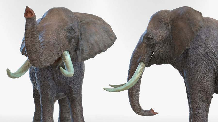 Animated Elephant Walking Fur Rigged royalty-free 3d model - Preview no. 12