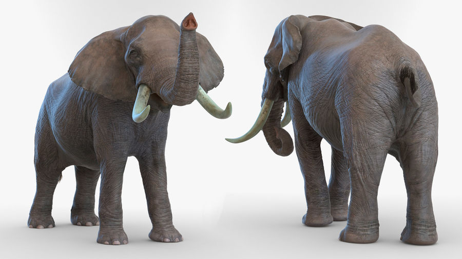 Animated Elephant Walking Fur Rigged royalty-free 3d model - Preview no. 7