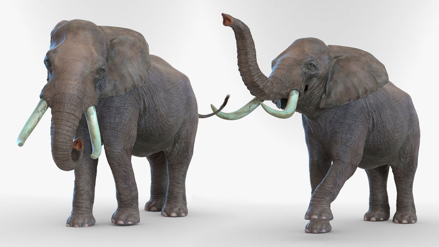 Animated Elephant Walking Fur Rigged royalty-free 3d model - Preview no. 6