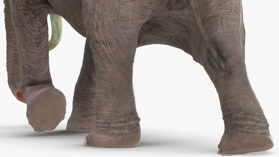 Animated Elephant Walking Fur Rigged royalty-free 3d model - Preview no. 10