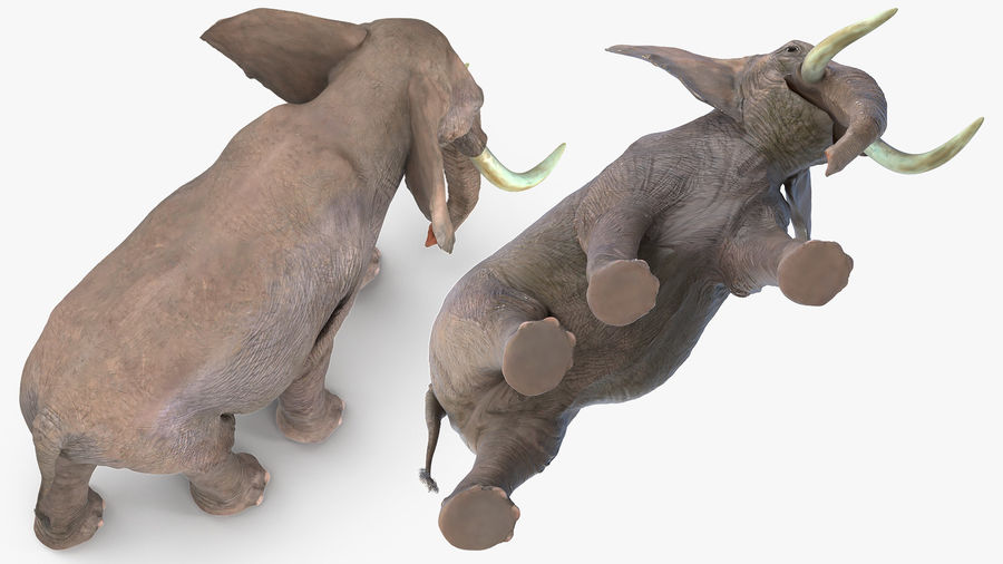Animated Elephant Walking Fur Rigged royalty-free 3d model - Preview no. 8