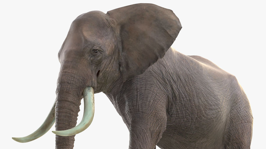 Animated Elephant Walking Fur Rigged royalty-free 3d model - Preview no. 11