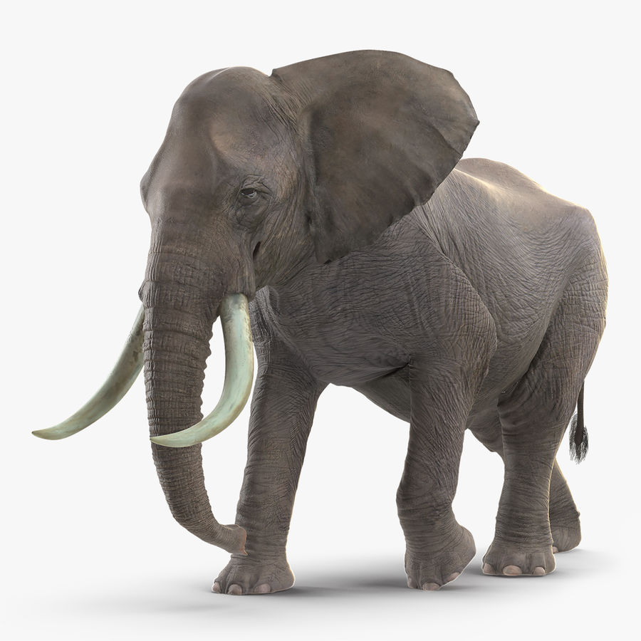 Animated Elephant Walking Fur Rigged royalty-free 3d model - Preview no. 1