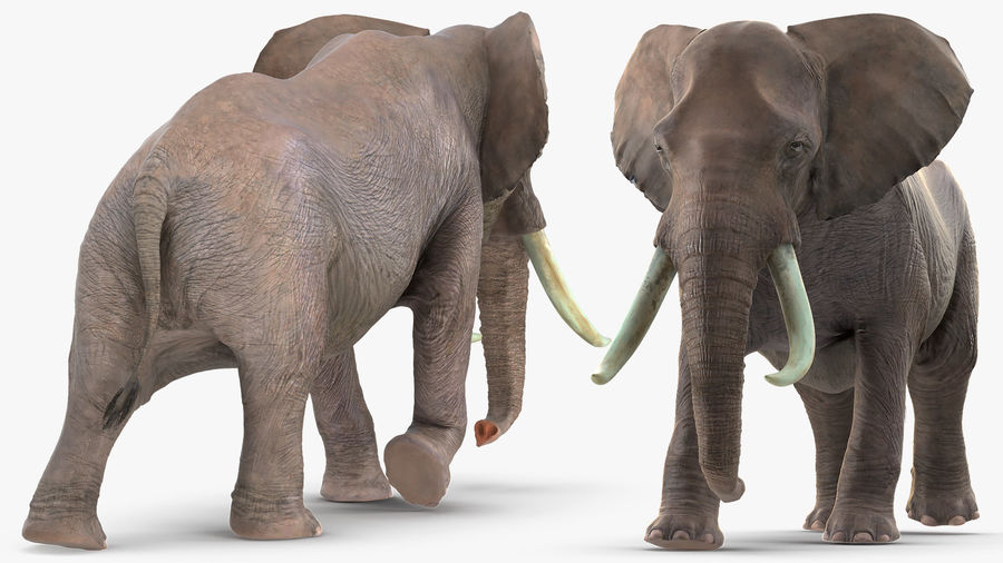 Animated Elephant Walking Fur Rigged royalty-free 3d model - Preview no. 5