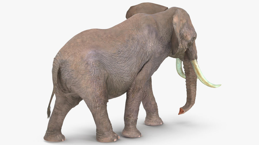 Animated Elephant Walking Fur Rigged royalty-free 3d model - Preview no. 4