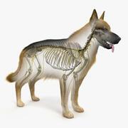 Hundhud, skelett och nerver 3d model