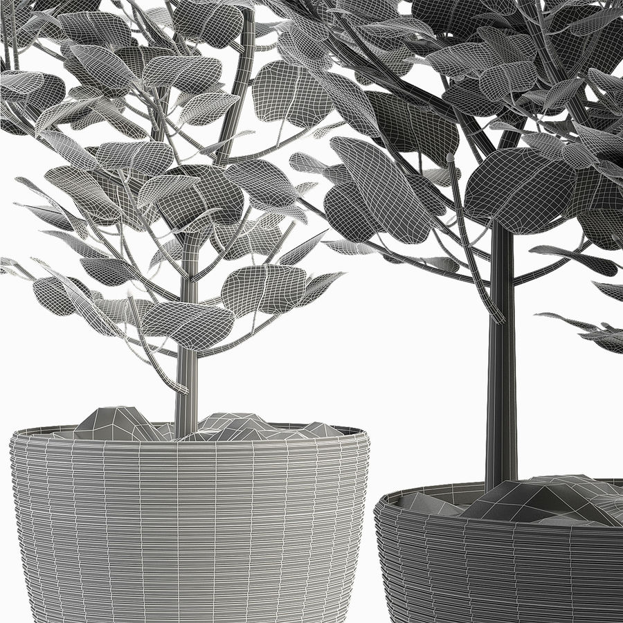 收藏植物4 royalty-free 3d model - Preview no. 6