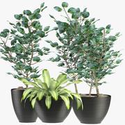 Kolekcje Rośliny 4 3d model