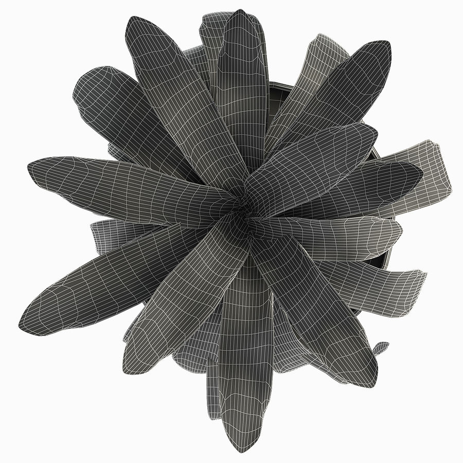Exotic Plants royalty-free 3d model - Preview no. 6