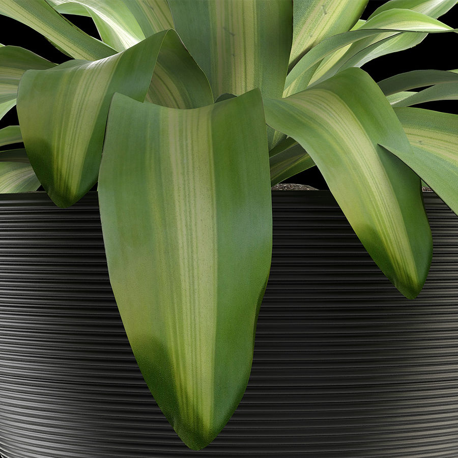 Exotic Plants royalty-free 3d model - Preview no. 3