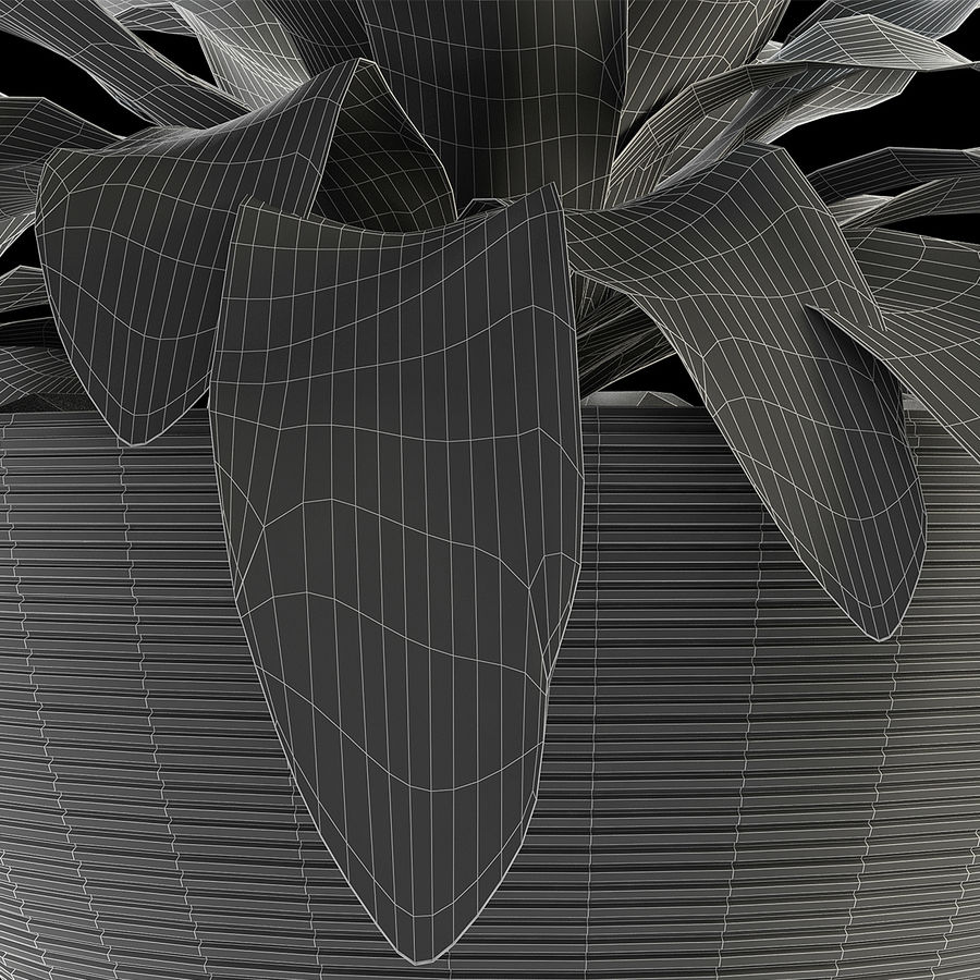 Exotic Plants royalty-free 3d model - Preview no. 4