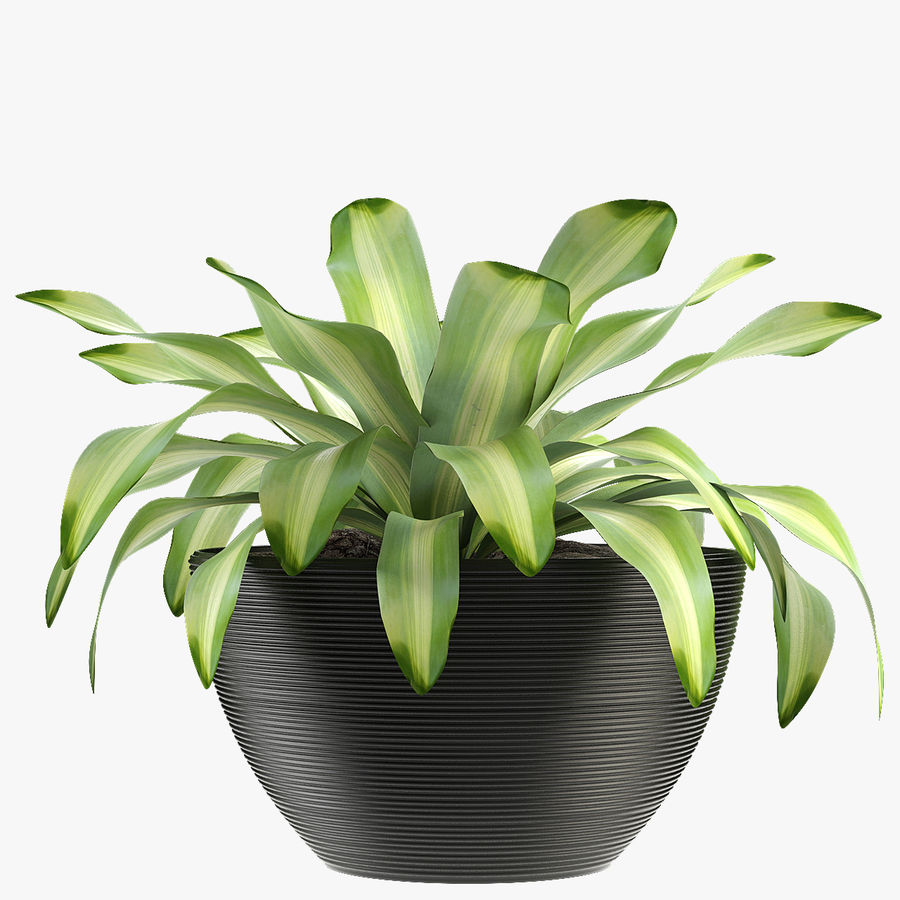 Exotic Plants royalty-free 3d model - Preview no. 1