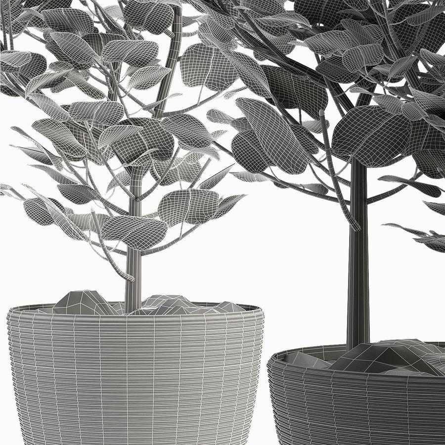 Rośliny egzotyczne royalty-free 3d model - Preview no. 5