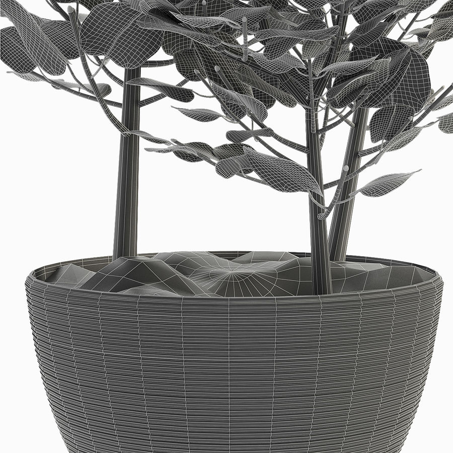 外来植物 royalty-free 3d model - Preview no. 7