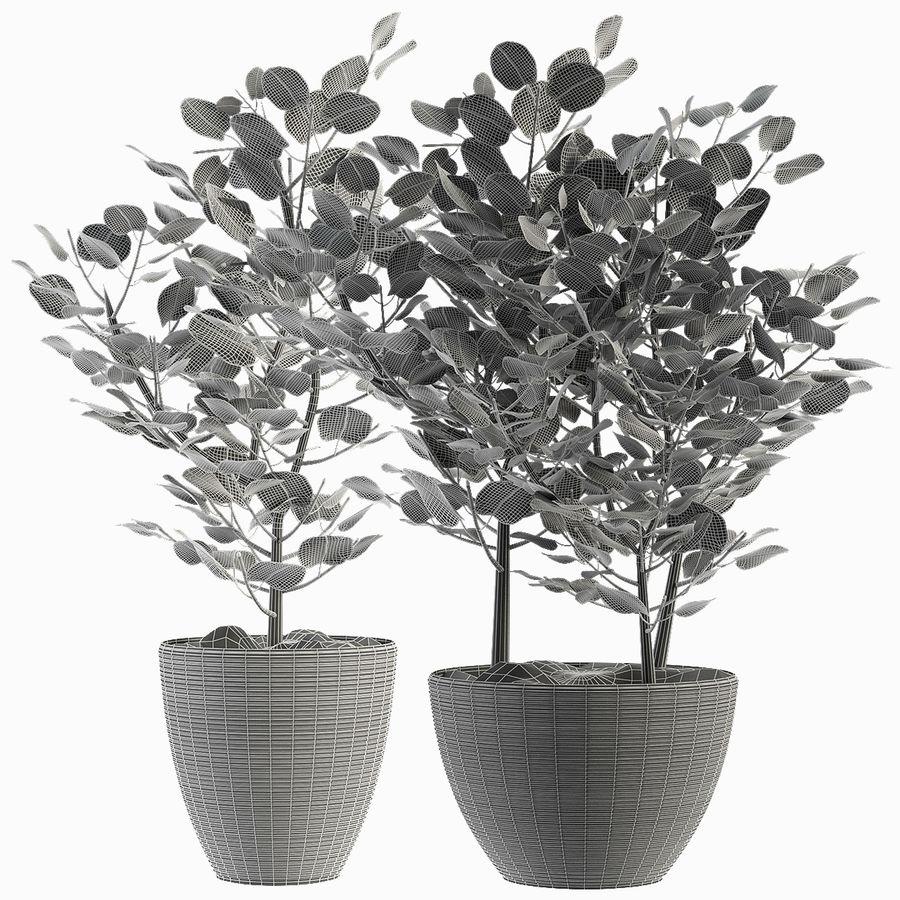 Rośliny egzotyczne royalty-free 3d model - Preview no. 3