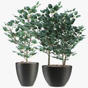 Rośliny egzotyczne 3d model