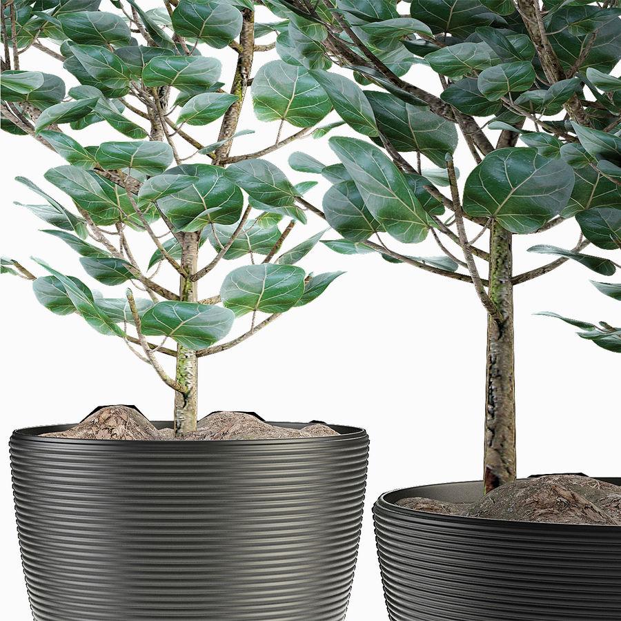 Rośliny egzotyczne royalty-free 3d model - Preview no. 4