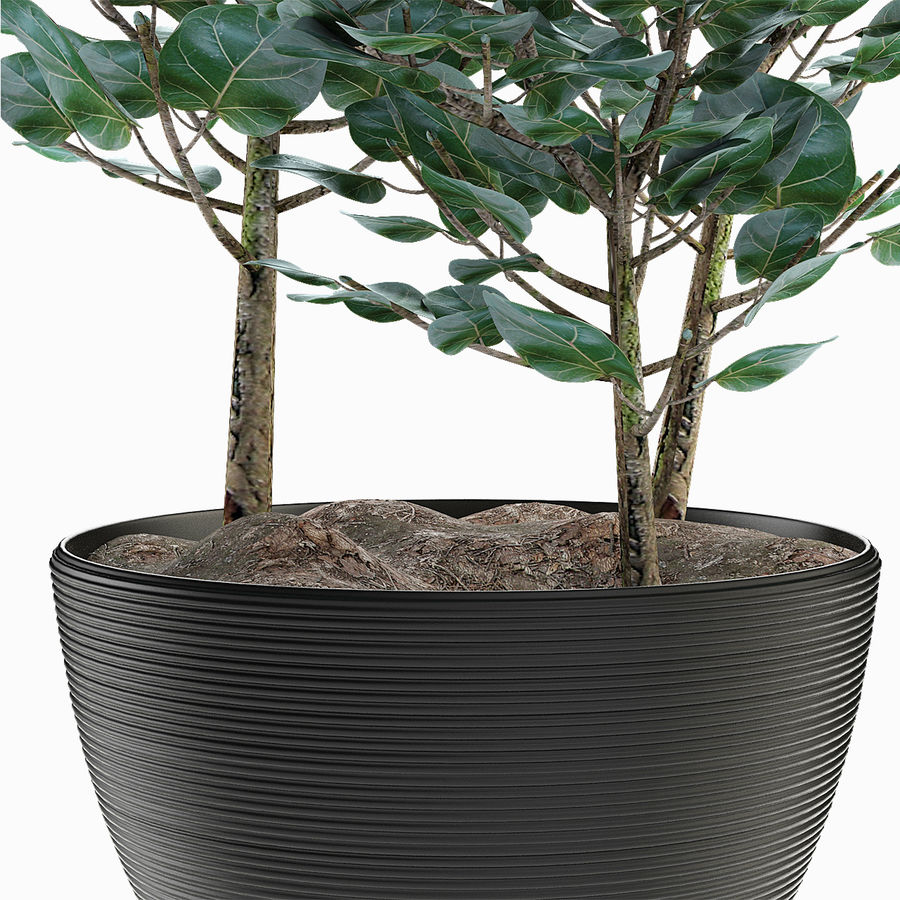 Rośliny egzotyczne royalty-free 3d model - Preview no. 6