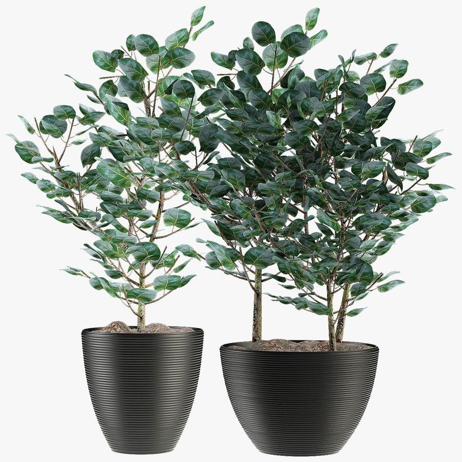 Rośliny egzotyczne royalty-free 3d model - Preview no. 1