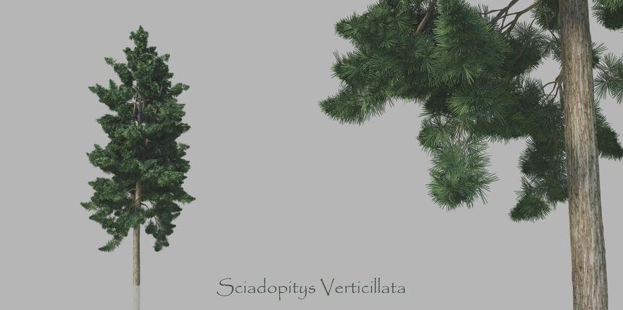 Pacote realista de árvores coníferas royalty-free 3d model - Preview no. 6